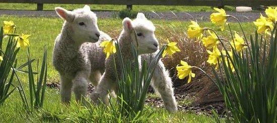 Tai Tapu Lodge: Springtime