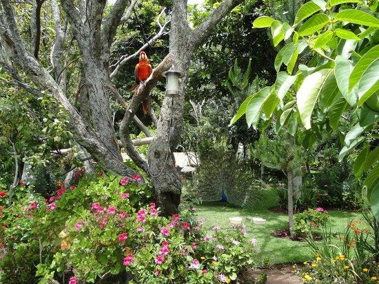 Aranwa Sacred Valley Hotel & Wellness: Hotel view