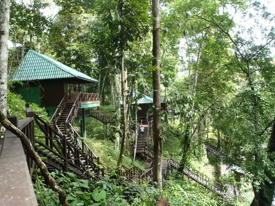 Tabin Wildlife Resort: View from hill lodge n.6