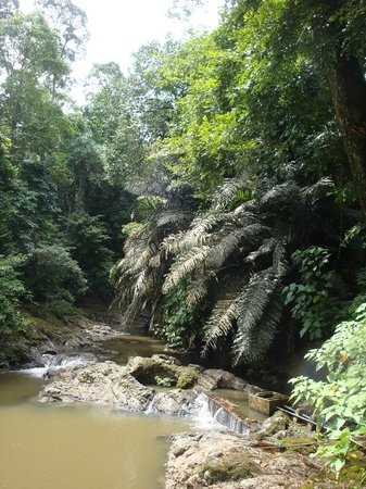Tabin Wildlife Resort: Surrounding