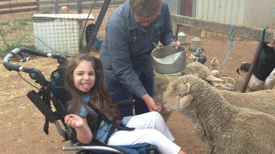 Barcoos Farmstays Bathurst: The friendly sheep hand fed grain around Imogen. She loved their Baa's!