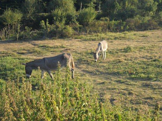 Les Cabanes du Bois Landry : Bois Landry
