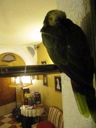 Albergo Casa Peron: casa peron albergo vista interna