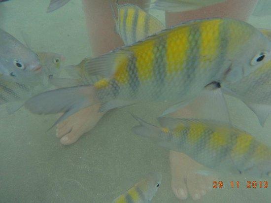 Fortaleza Beach: piscinas naturais