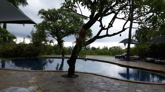 The Damai: View of the pool