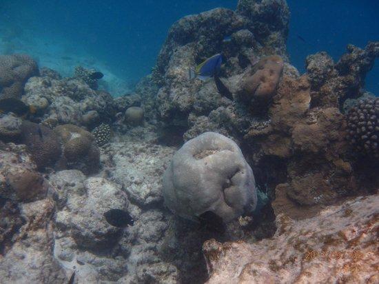 Olhuveli Beach & Spa Maldives: Snorkeling in Olhuveli