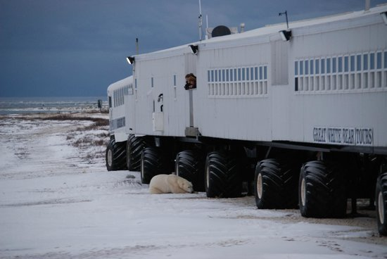 Great White Bear Tundra Lodge: The Great White Bear Lodge..our hotel on the tundra with 24/7 views and chances of sightseeing.