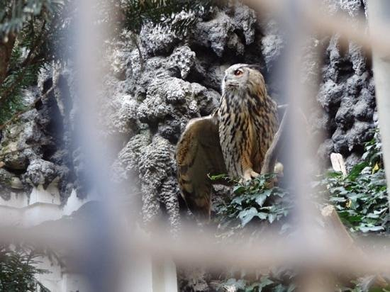 Eagle Owls in the gardens of the Wallenstein Palace Prague