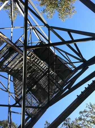 Dorset Scenic Lookout Tower: view from the base of tower