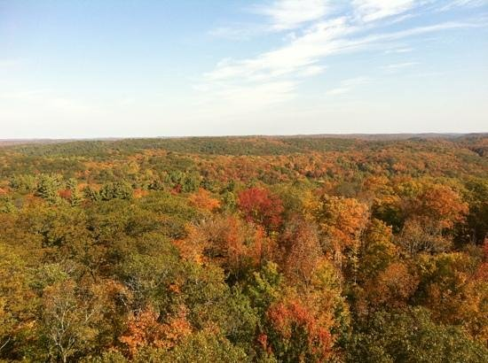 Dorset Scenic Lookout Tower: view from top of tower