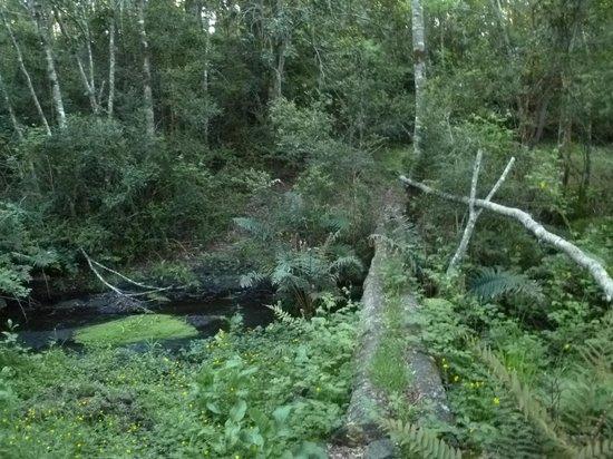 La Codorniz: Sendero en el bosque/path in the forest