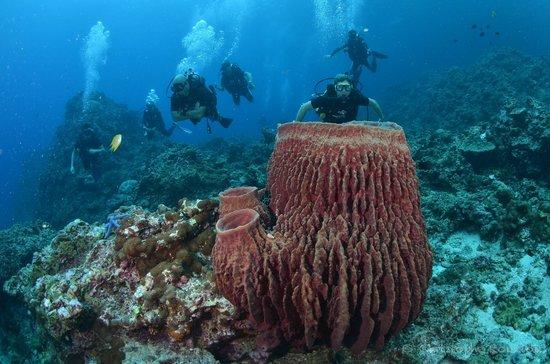Palm Beach Divers Sous L Eau Merveilleux