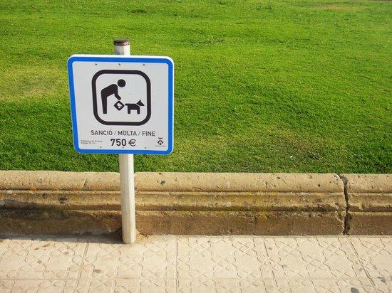 Passeig Maritim : Собакам следует быть осторожнее