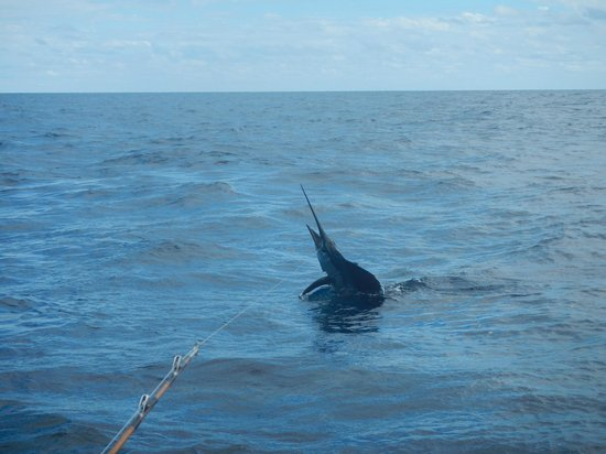 Rancho Leonero Resort: My wife's Sailfish