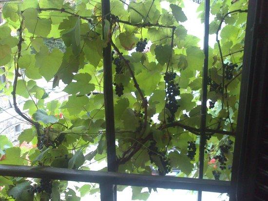 Il Torchio: grapes in balcony