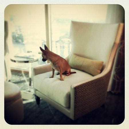 Four Seasons Hotel Las Vegas : Our dog loved these chairs