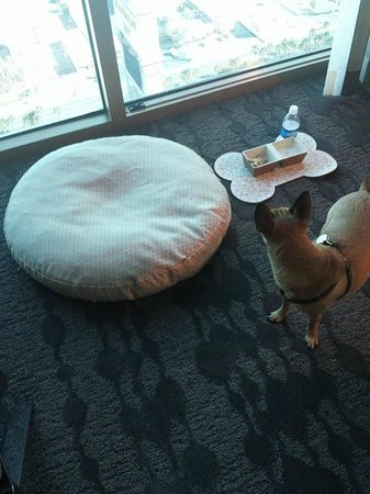 Four Seasons Hotel Las Vegas : What our dog found when we first checked in