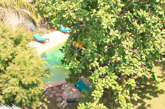Banana House & Wellness Centre: Swimmingpool in the garden