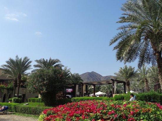 Miramar Al Aqah Beach Resort: отель