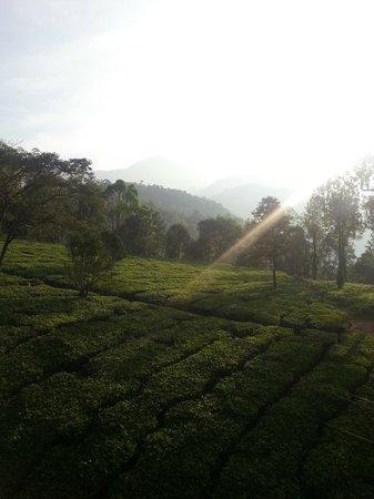 Gruenberg Tea Plantation Haus: View From Bedroom