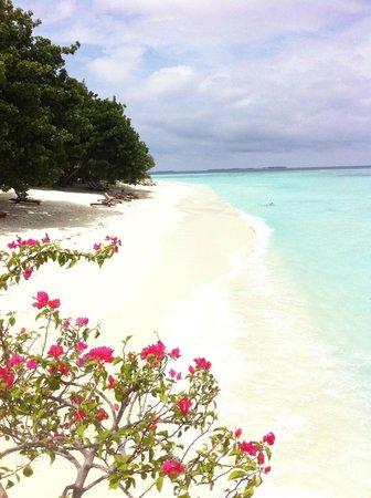 Pom Pom Island Resort & Spa: ... ^_^ ... Il buongiorno si vede dal mattino ... ^_^ ...