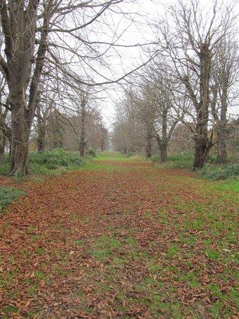 Hever Castle & Gardens: woods