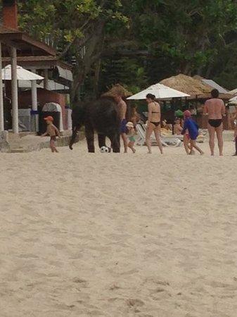 Le Meridien Phuket Beach Resort : l'éléphant de l'hotel
