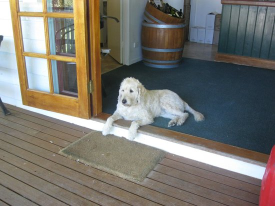 Petersons of Mudgee: The Pooch at Peterson's