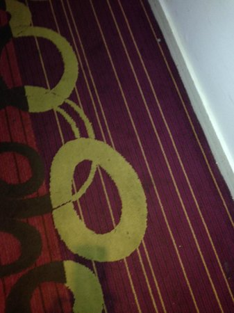 Daddy O Hotel : Carpet