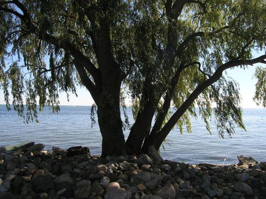 Lake St. Clair Metropark: Lakeside tree