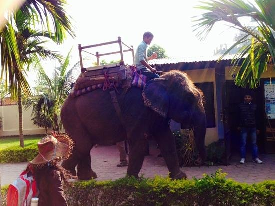Hotel Rainforest: слониха которая будила нас по утрам.