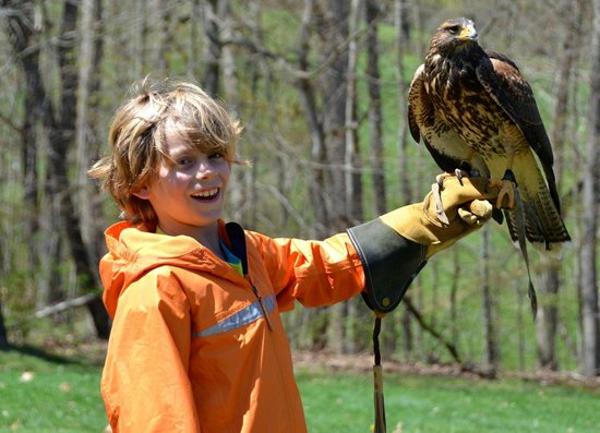 The Omni Homestead Resort : Falconry at The Homestead