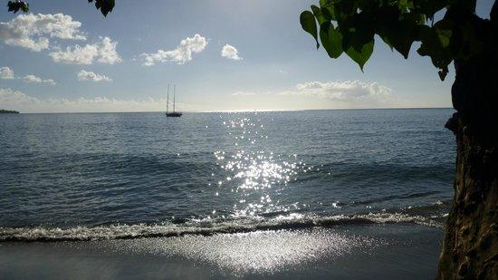Mango Bay Cottages: der Strand