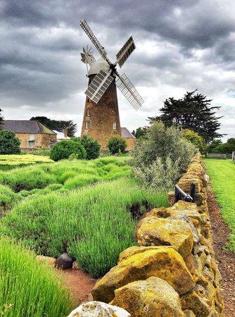 Callington Mill: Windmill at Oatlands