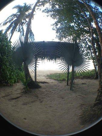 Hotel La Costa de Papito: Coconut grove by the hotel.