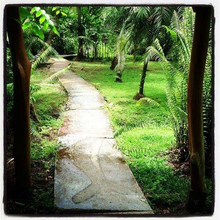 Hotel La Costa de Papito : Pathway to our bungalow