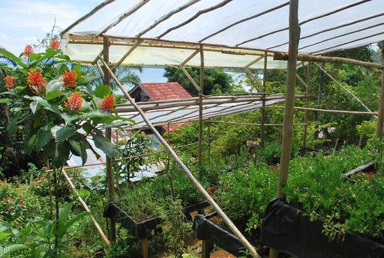 Casa Horizontes Corcovado : the kitchen garden