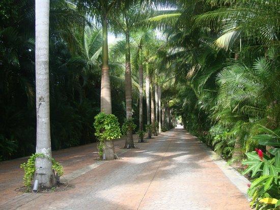 Presidente Inter-Continental Cozumel Resort & Spa: Camino entrada al hotel