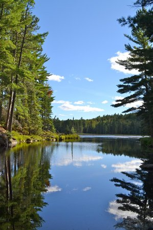 Beaver Pond Trail: Reflections