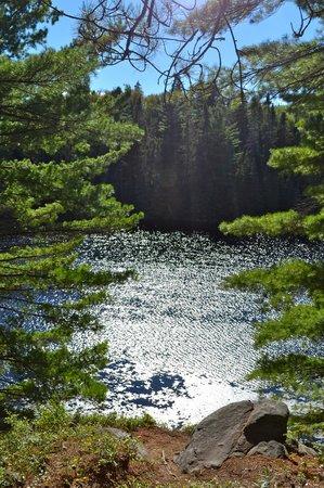 Beaver Pond Trail: Shimmering light