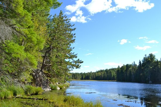 Beaver Pond Trail: Reaching out over the lake