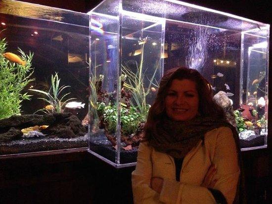 Shadowbrook : Fish tank by the bar.