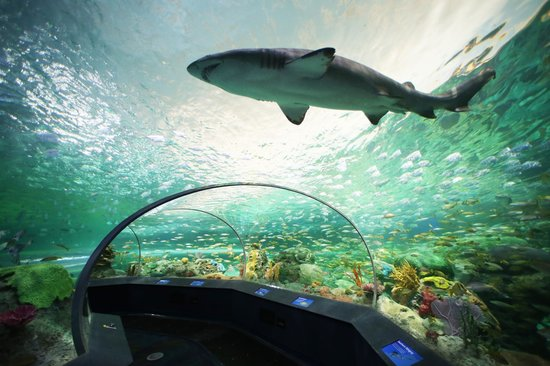 Photo of Aquarium Ripley's Aquarium Of Canada at 288 Bremner Boulevard, Toronto M5V 3L9, Canada
