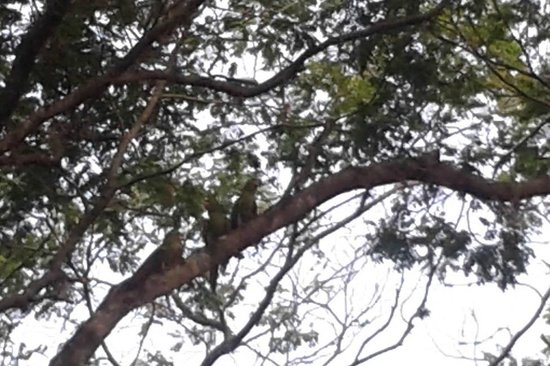 Hotel Estancia Barra Bonita: Maritacas nas árvores próximas aos chalés