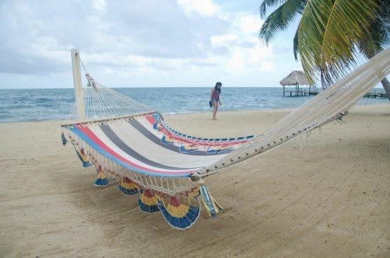 Jaguar Reef Lodge & Spa: Hammocks on the beach