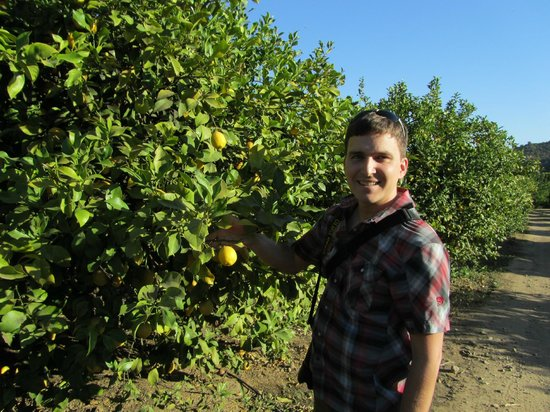 Colchagua Camp: Lemon Tree Field
