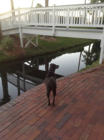 TradeWinds Island Grand Resort: Chiquita looking for the paddle boats and swans!