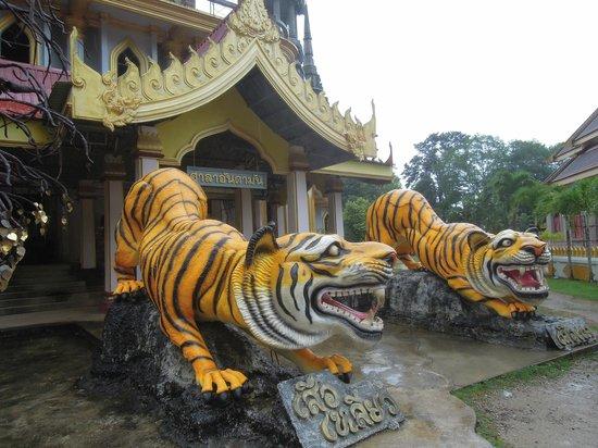 Krabi Kayak: tijgers