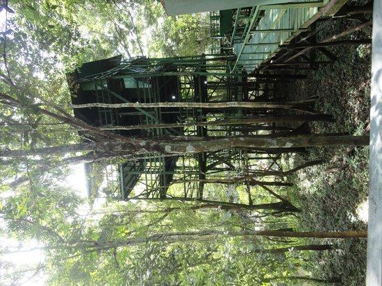 Ariau Amazon Towers Hotel: Casa do Tarzan