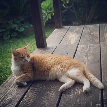 Shimayasai Shokudo Thianda: ネコが席の近くでのんびり。